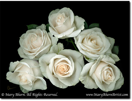 white rose pictures. Digital Painting, quot;White Rose