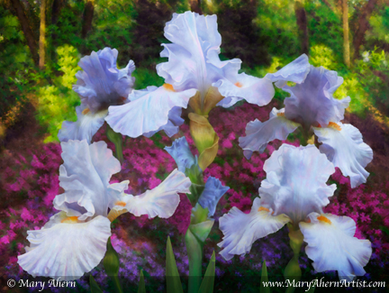 Light Blue Iris in the Garden. Mixed Media Painting. 30x40&quot; Gallery Wrapped.  Mary Ahern.