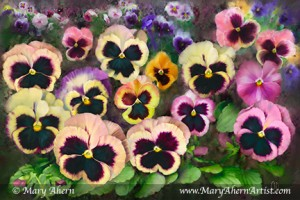 "Pansy Field. Mixed Media Painting. Available in 24x26"", 20x30"" and 16x24"" Standard or Gallery Wrapped"