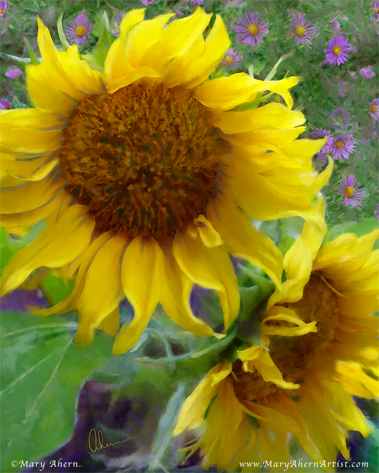 Sunflowers with Purple Asters