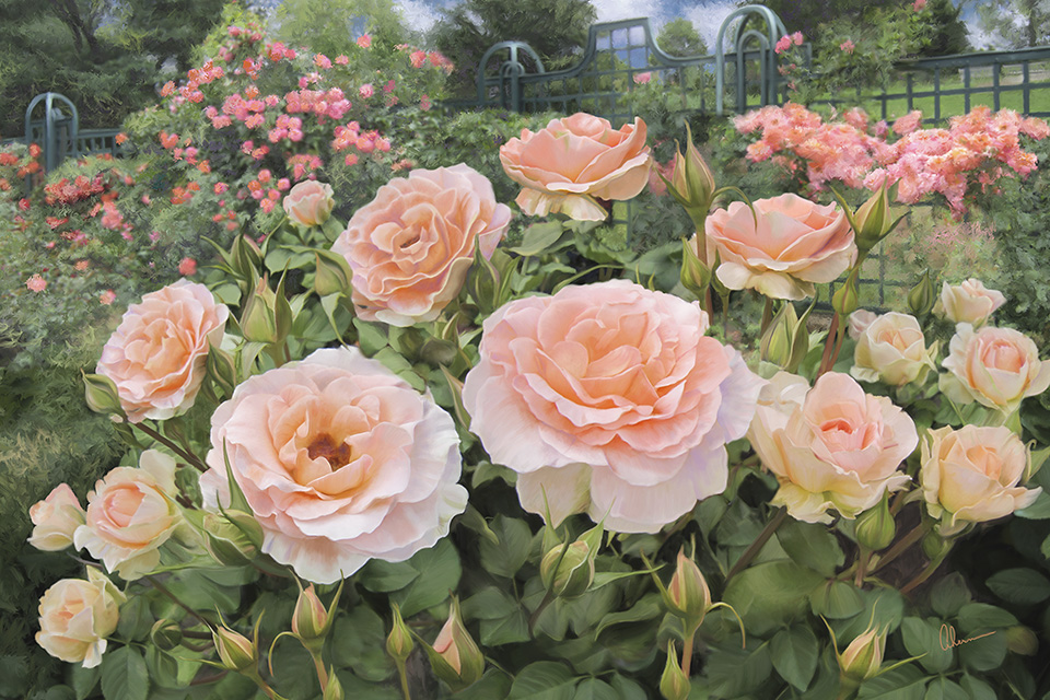 Peggy\'s Rose Garden