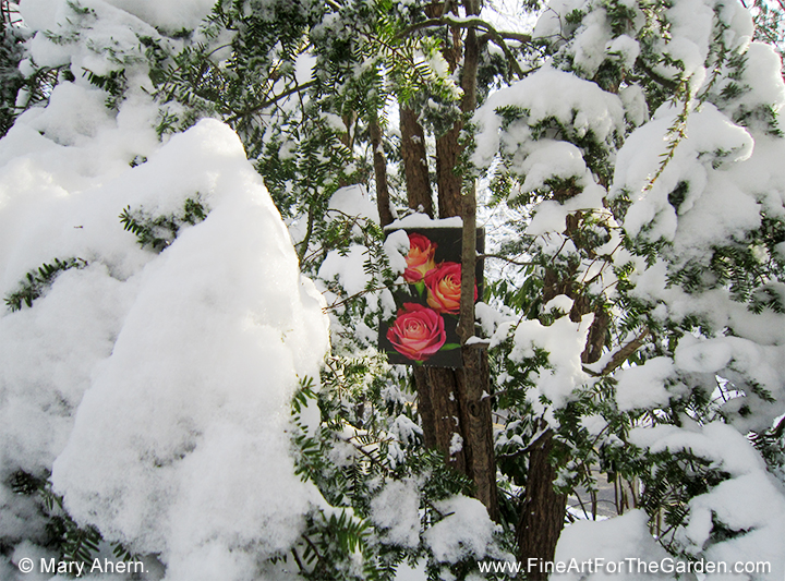 Triple Red Rose in the garden in the snow